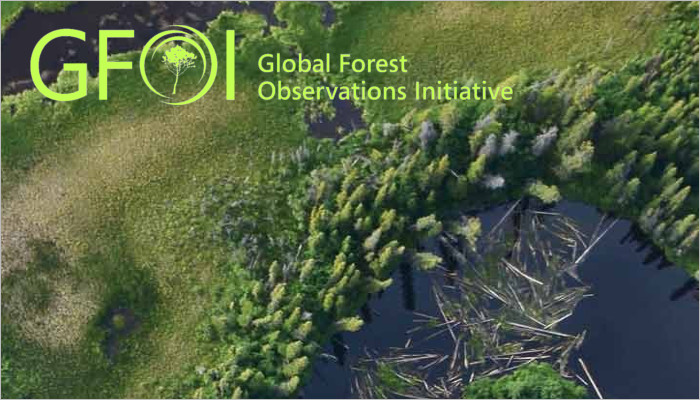 Forest with GFOI logo